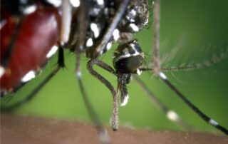 zanzare neem