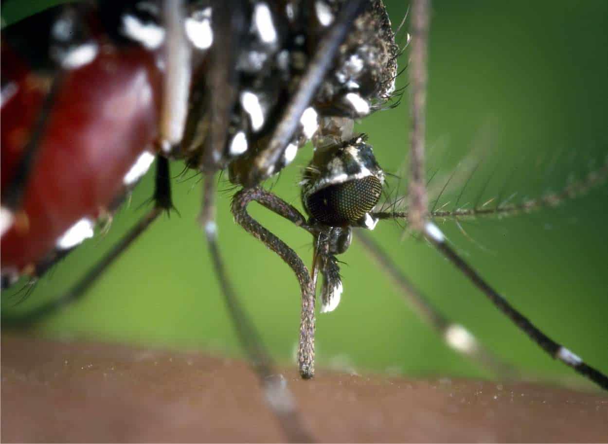 Olio di neem contro le zanzare
