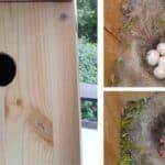 Realizzare un nido artificiale per uccelli insettivori