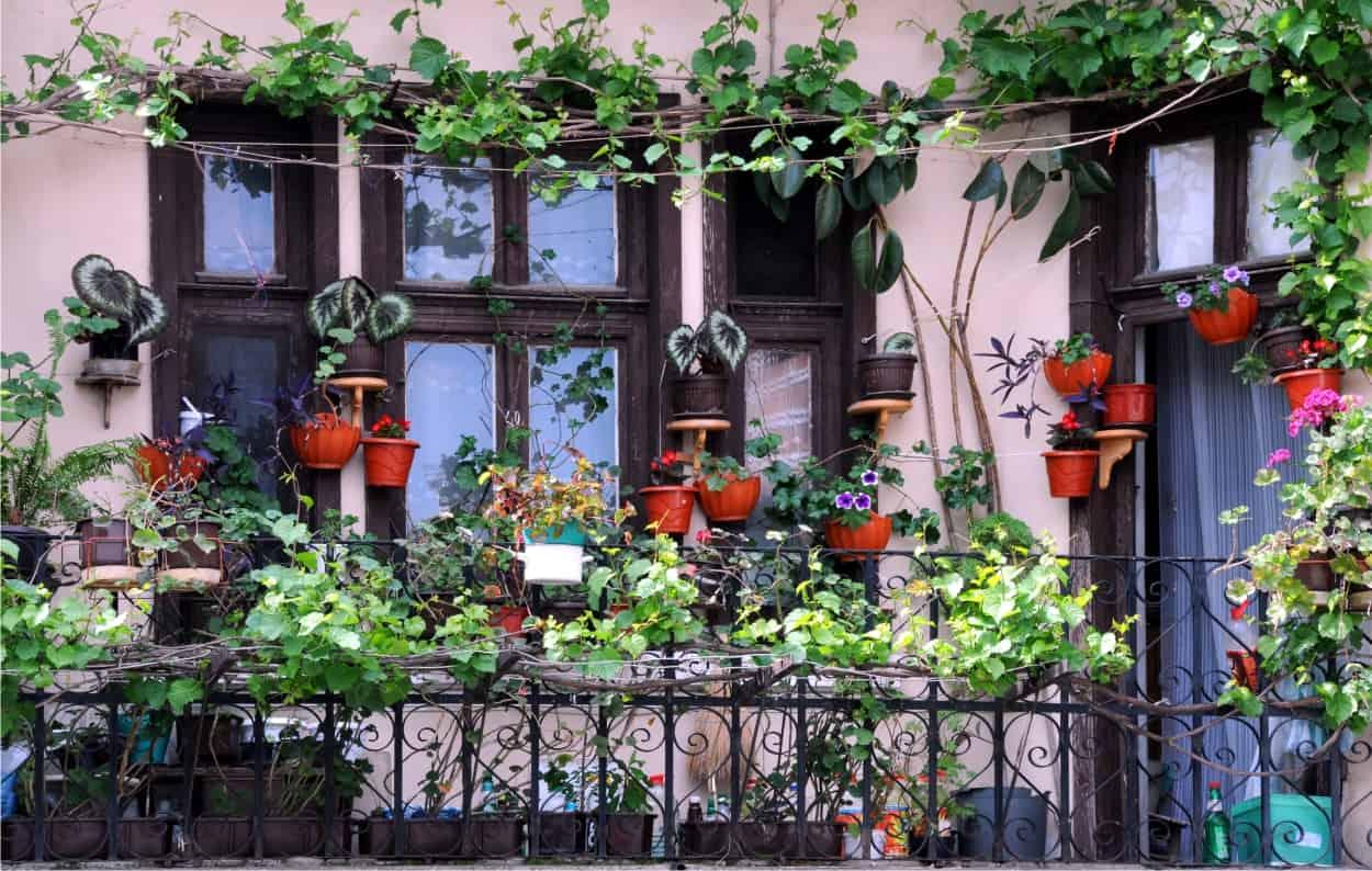 piante in vaso e vacanze