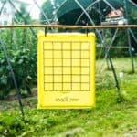 Trappole a feromoni contro le cimici: Block Trap