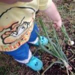 Edible garden: un giardino commestibile da fare coi bambini