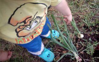 edible garden le cipolle