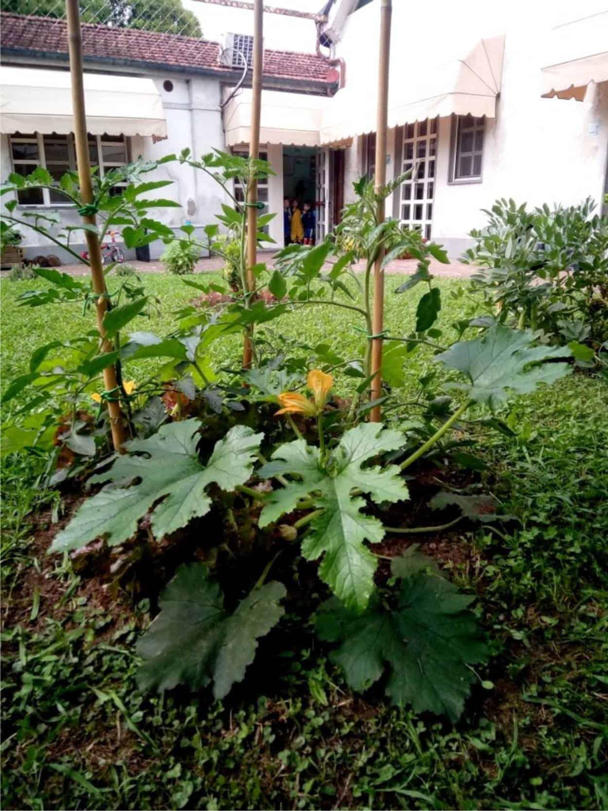 isola di zucchine