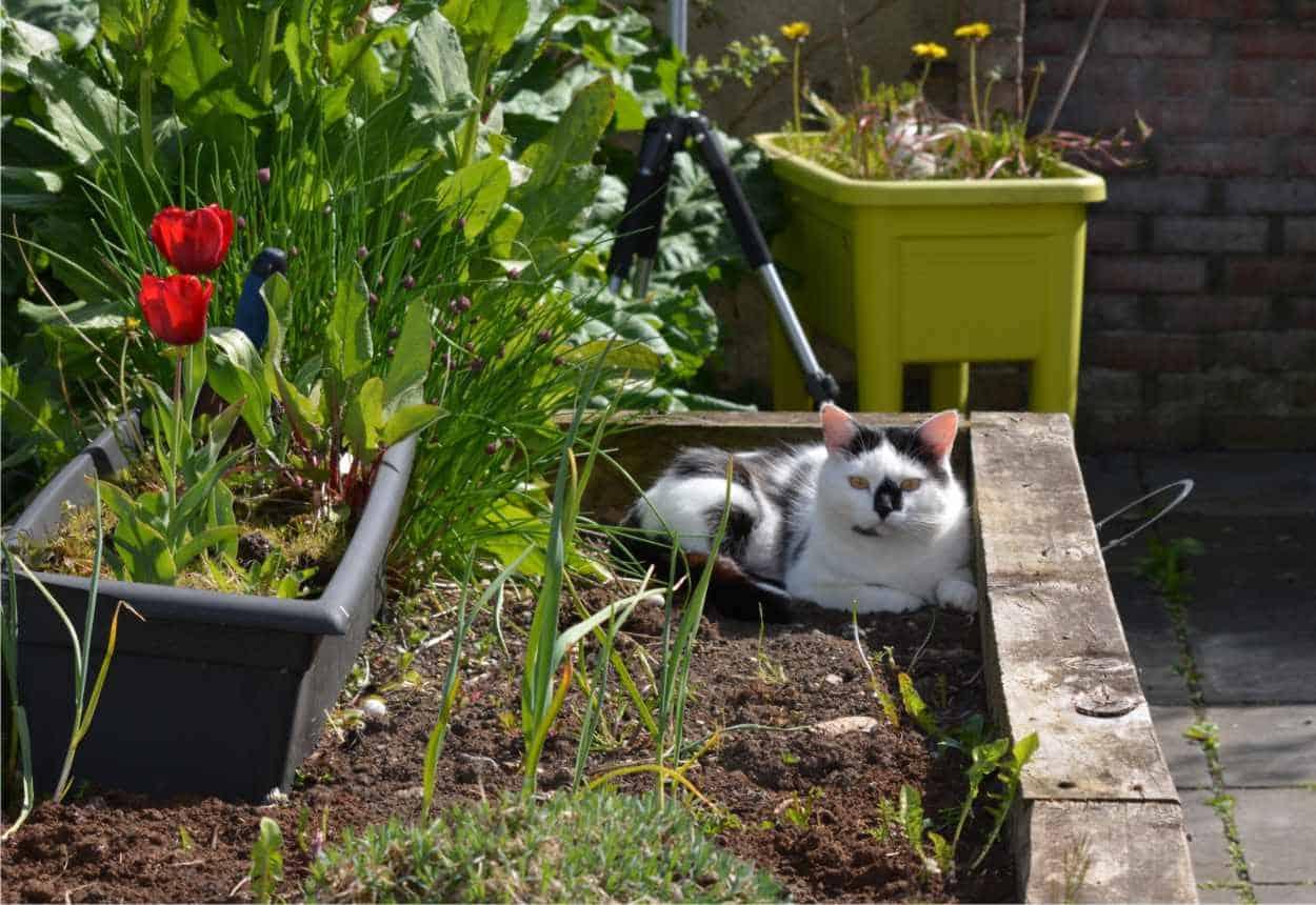 gatto in orto