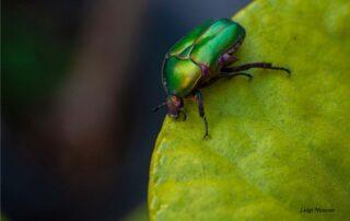 insetti e biodiversità