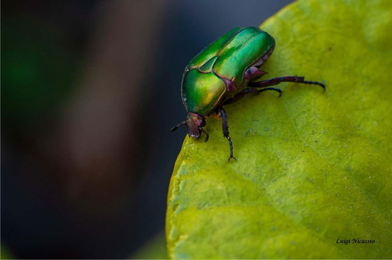 Il ruolo degli insetti nell'orto