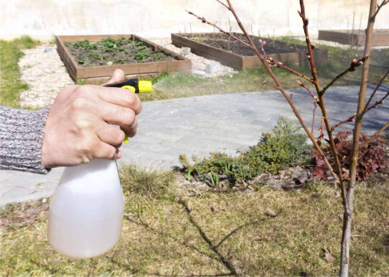 alberello trattato nel frutteto invernale