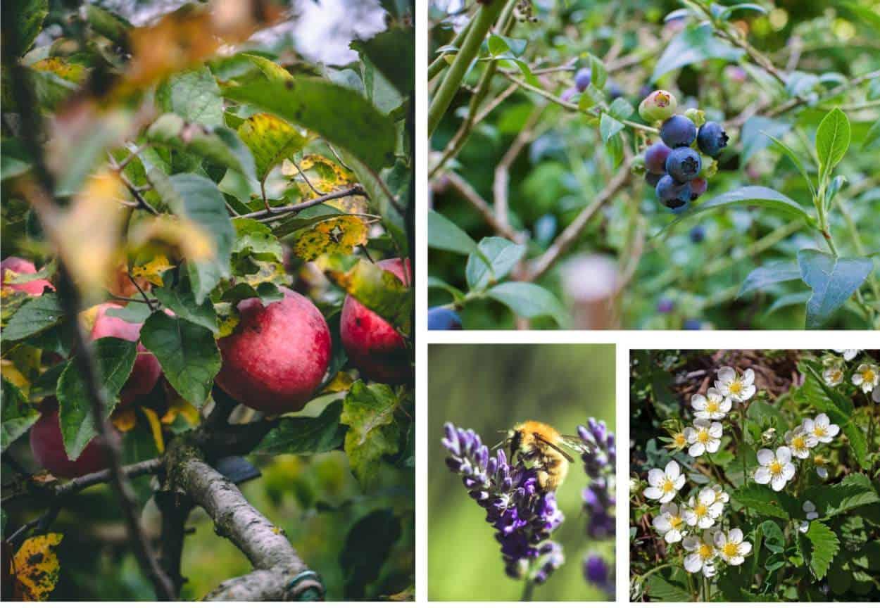 Food forest: come si realizza una foresta commestibile