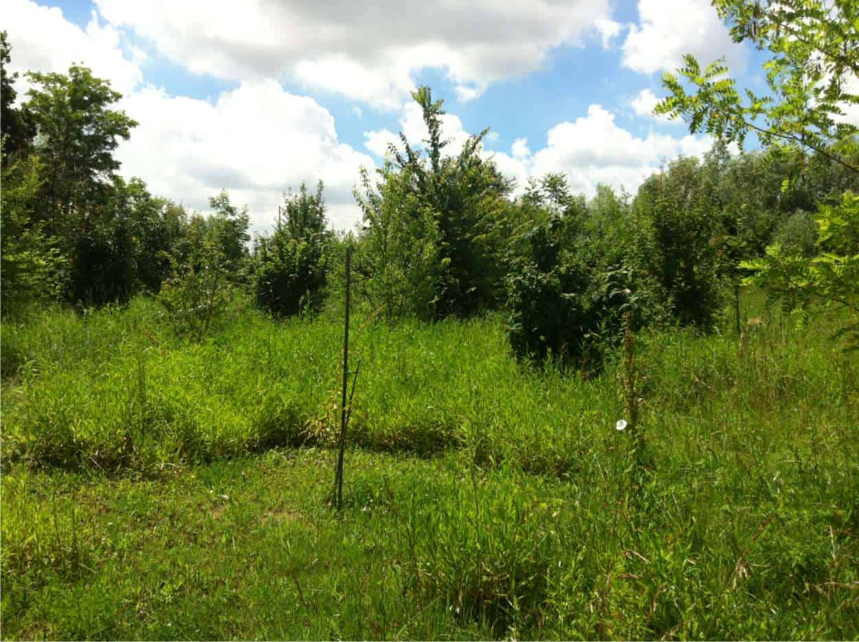 food forest realizzata