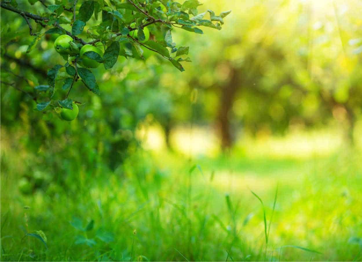 L'inerbimento controllato nel frutteto