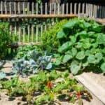 Come trovare un terreno per l'orto, anche senza comprarlo