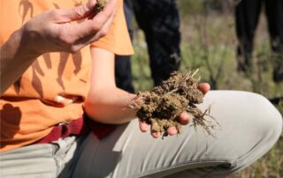 suolo rigenerato
