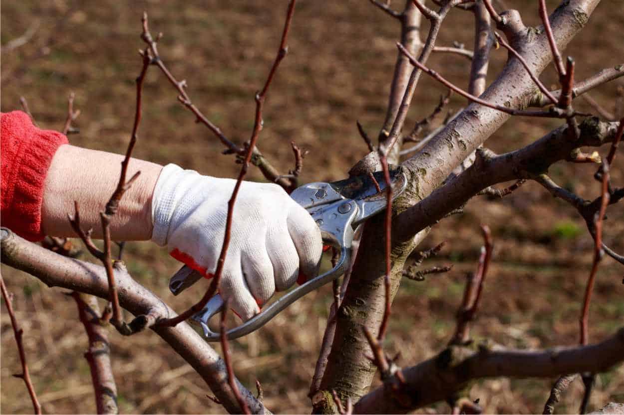 Gennaio: potature e lavori nel frutteto