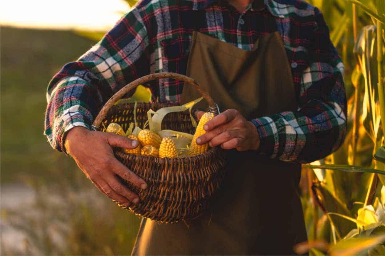 agricoltura ecologia