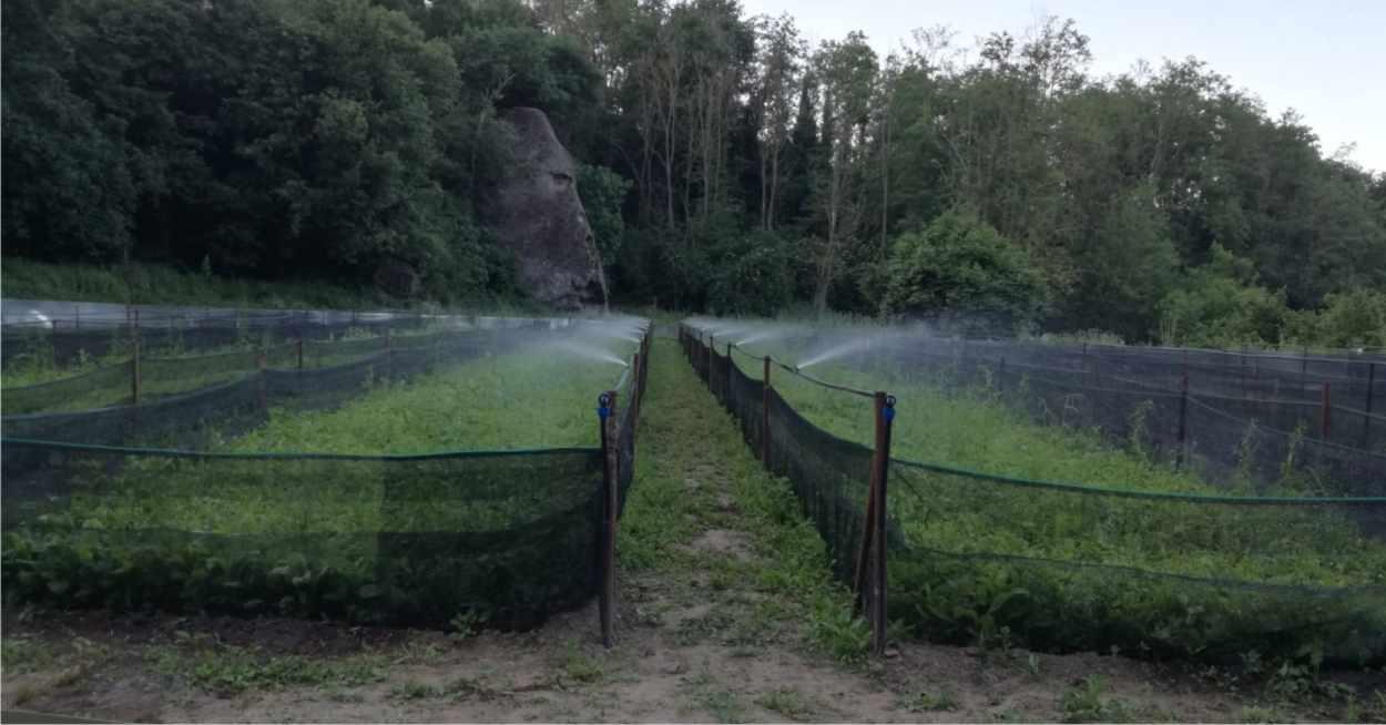 irrigazione elicicoltura