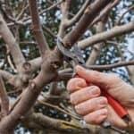 Febbraio: potature e lavori nel frutteto