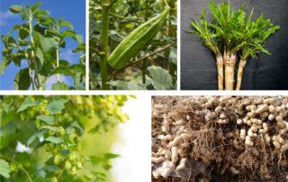 coltivazioni particolari da piantare a marzo aprile
