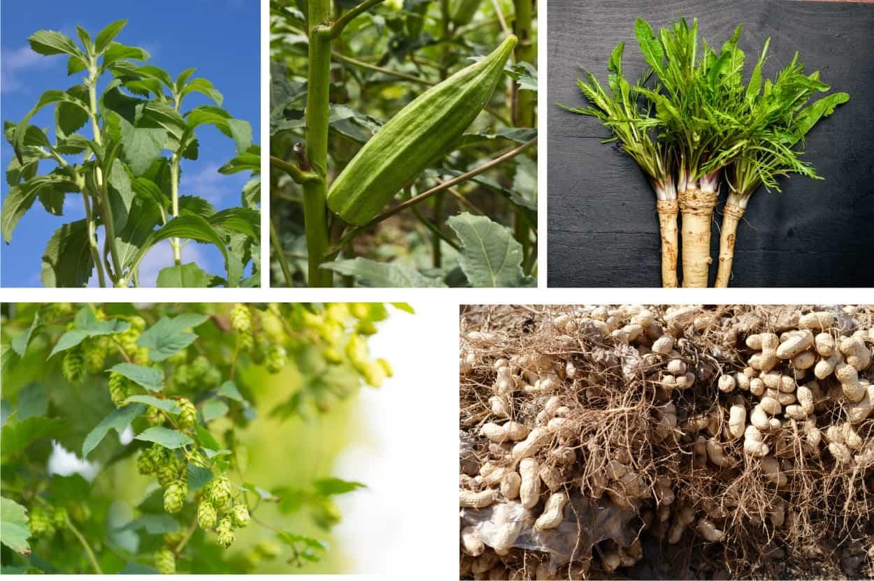 Coltivazioni insolite: 5 idee originali da piantare