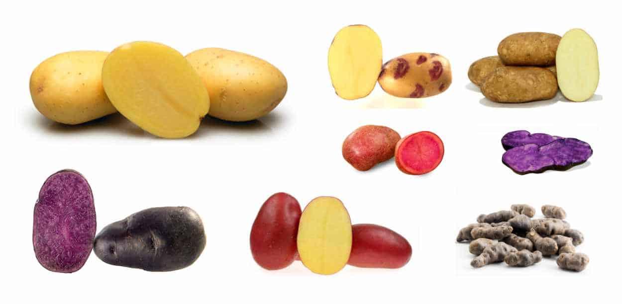 varietà di patate da seme