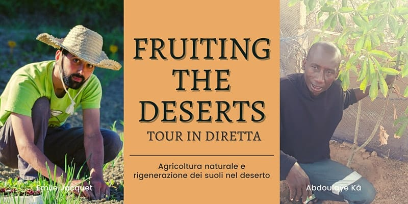 fruiting the deserts