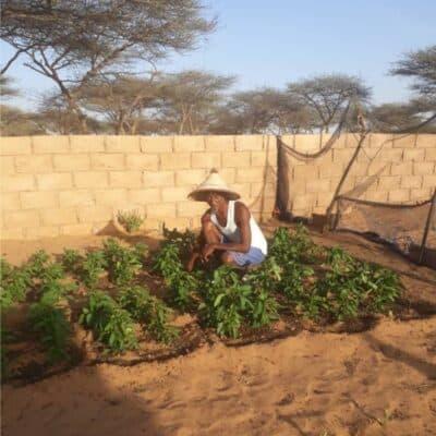 Aridocoltura: coltivare senz'acqua