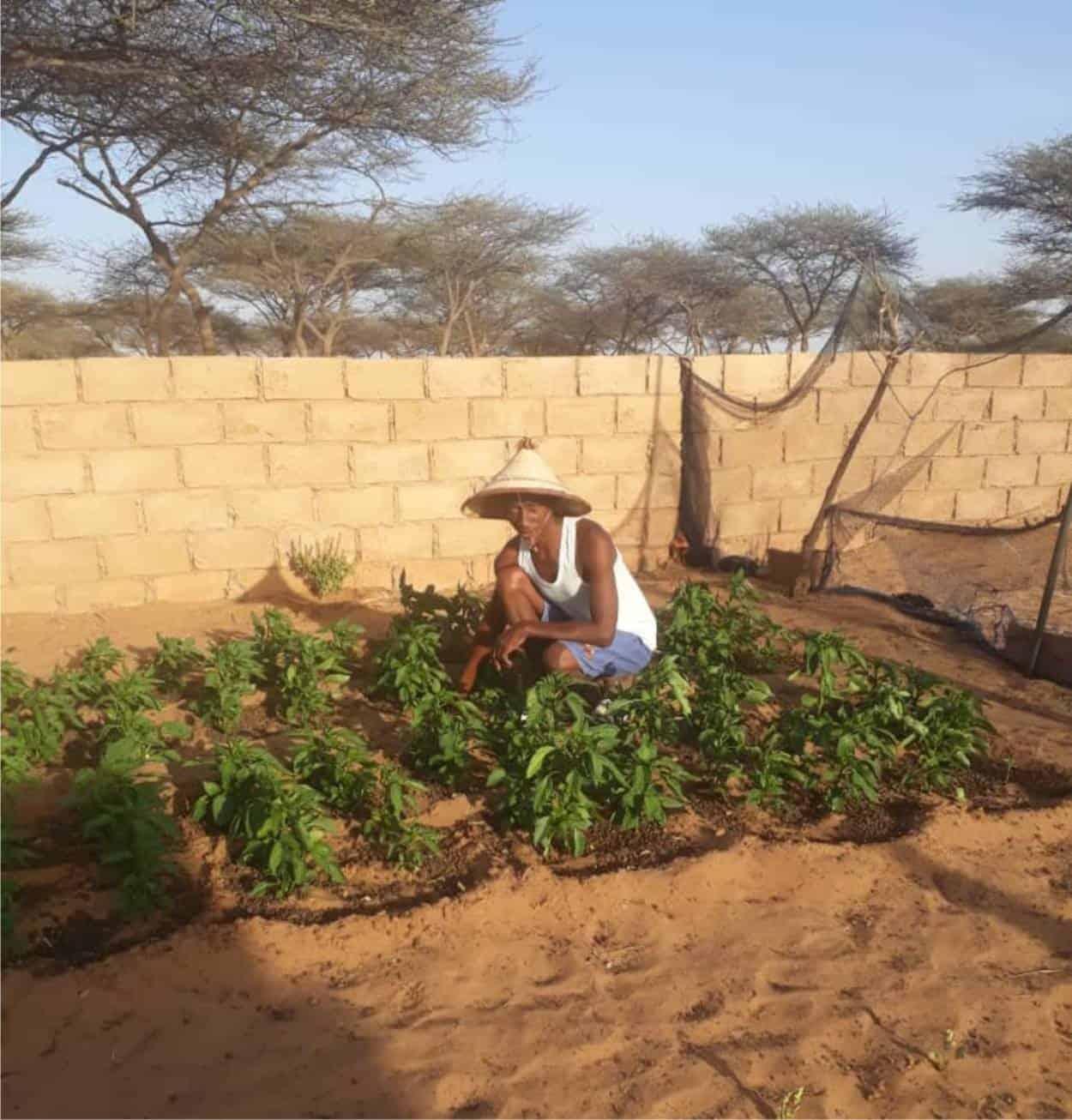 coltivare senza acqua