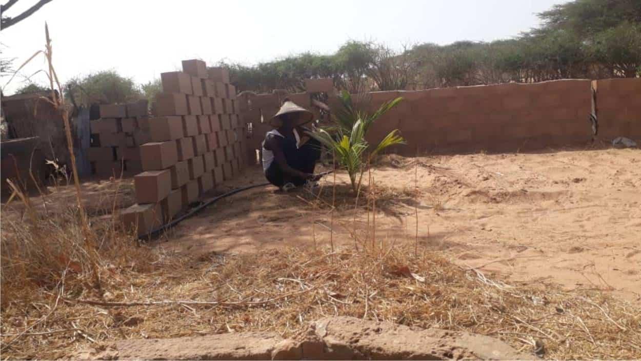 coltivazioni nel deserto