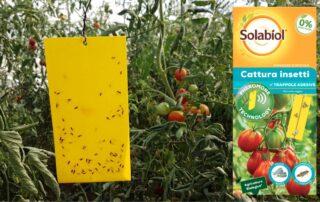 trappole per difesa pomodoro