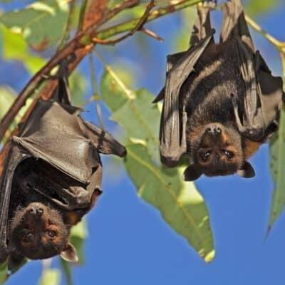 Pipistrelli: costruire bat box per accoglierli