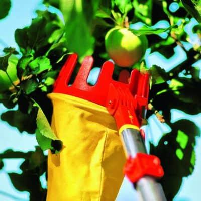 Cogliere la frutta sui rami alti: il raccoglifrutta