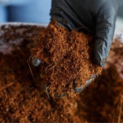 Fibra di cocco: substrato alternativo alla torba