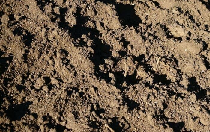 suolo agilloso