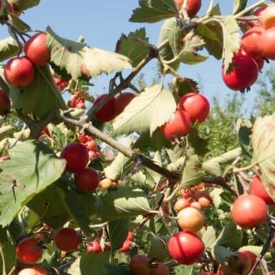 Introduzione alla Food Forest: scarica l'ebook