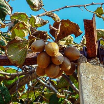 Lavori di ottobre nel frutteto